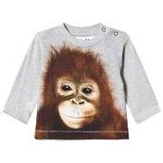 Molo Enovan T-Shirt Orangutan 62 cm (2-4 mnd)